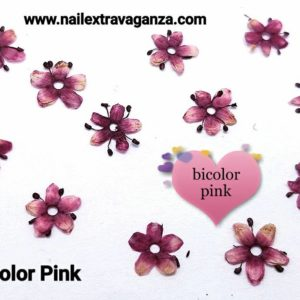 bicolor pink