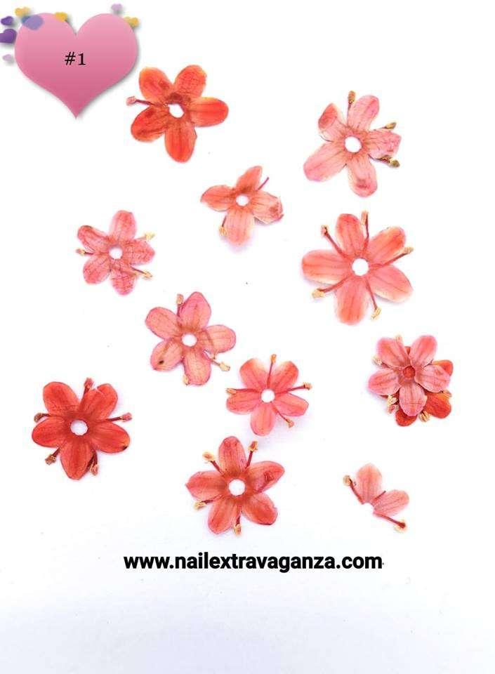 Dry Flower #1
