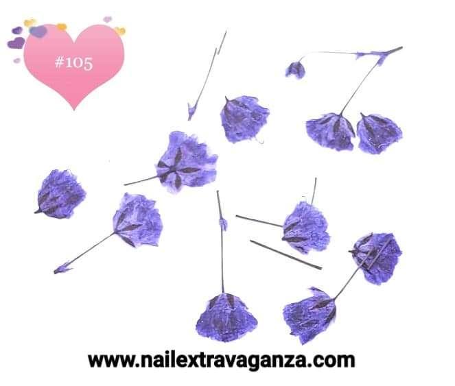 Dry Flowers #105