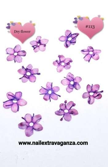 Dry Flowers #113