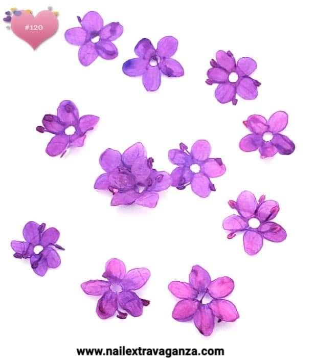 Dry Flowers #120