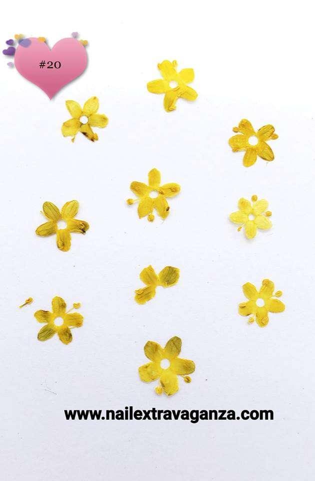 Dry Flower #20