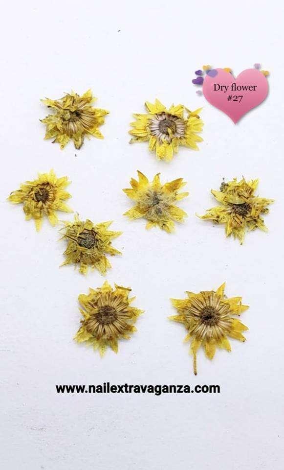 Dry Flower #27