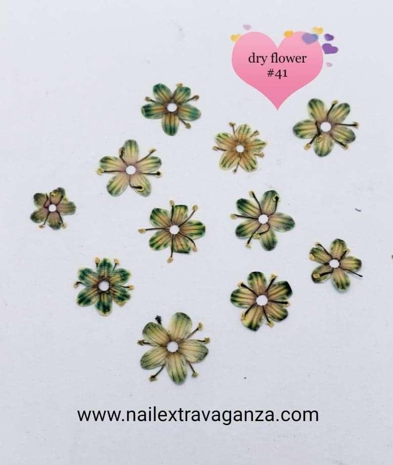 Dry Flower#41