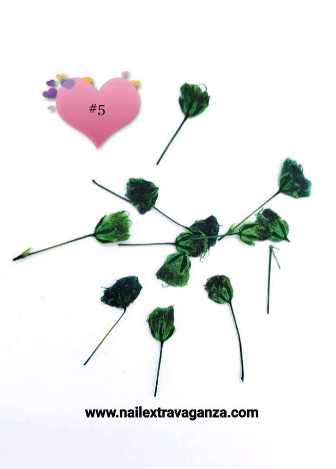 Dry Flower #5